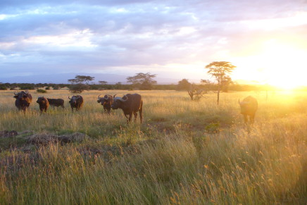 Wyndham to launch Ramada brand in Kenya