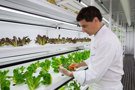 The Ritz-Carlton, Naples, grows its own lettuce in a container